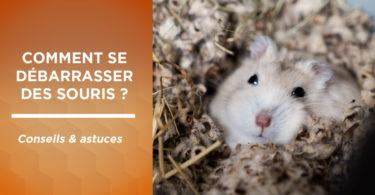 Astuces : comment se débarrasser des souris ?