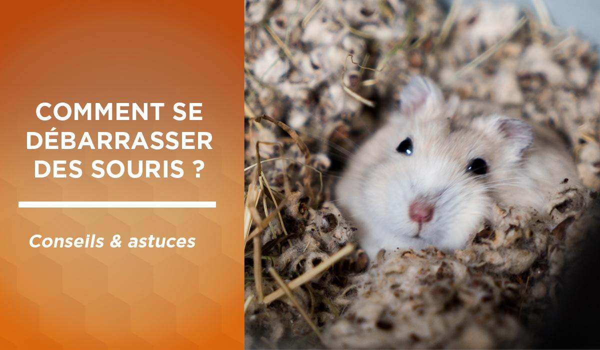 Souris Dans Les Murs Comment Faire comment se débarrasser des souris : nos conseils et astuces