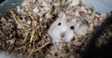 comment-se-debarrasser-des-souris