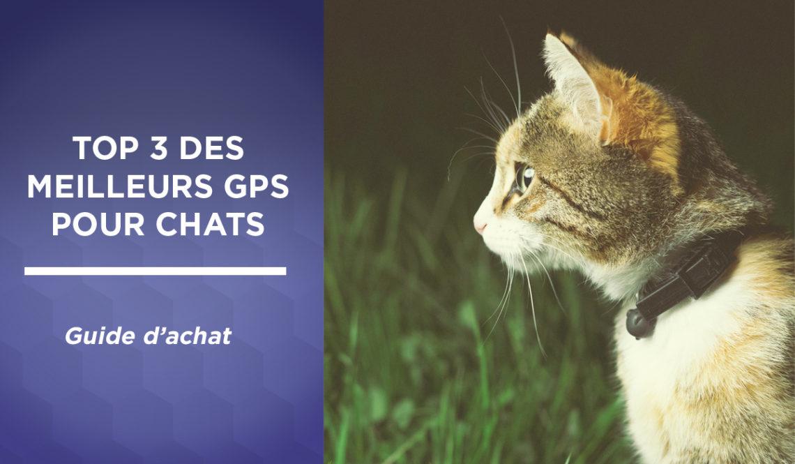 Top 3 des meilleurs GPS pour chat